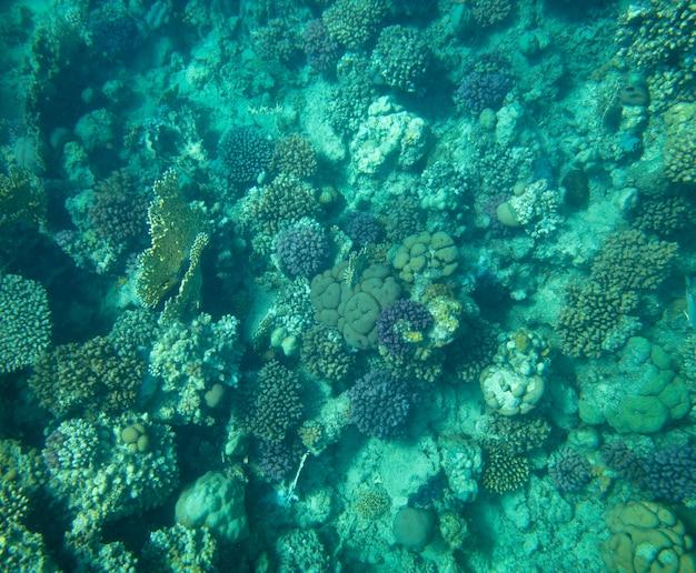 Ryby morskie w pobliżu koralowców podwodne lato tło