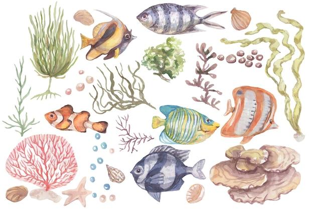 Ryby podwodne morze ocean koralowce algi muszle akwarela ręcznie rysowane ilustracja vintage dziki