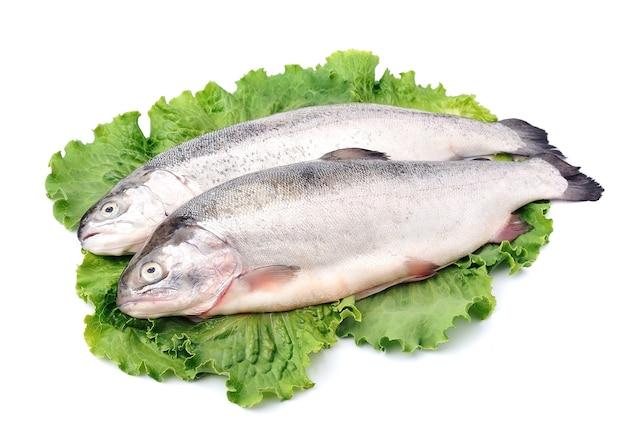 Ryby pstrąg z bliska na białym tle.