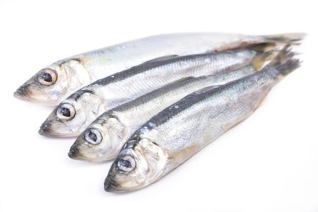 Ryby szprota