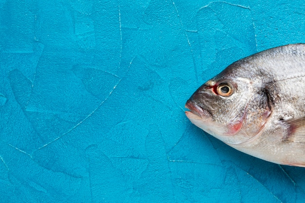 Ryby widok z góry na niebieskim tle