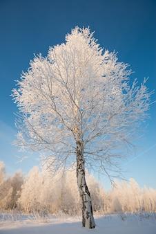 Rym na drzewach