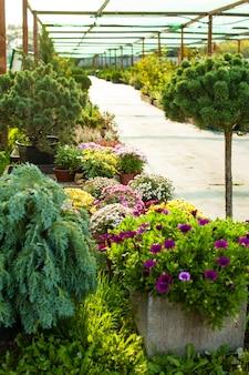 Rynek ogrodowy na zewnątrz