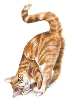 Rysunek czerwony kot na białym tle na białym tle. kolorowy rysunek ołówkiem, zabawny kot. dzieła sztuki