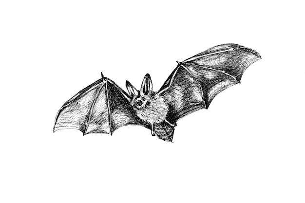Rysunek szkic nietoperza latający na białym tle.