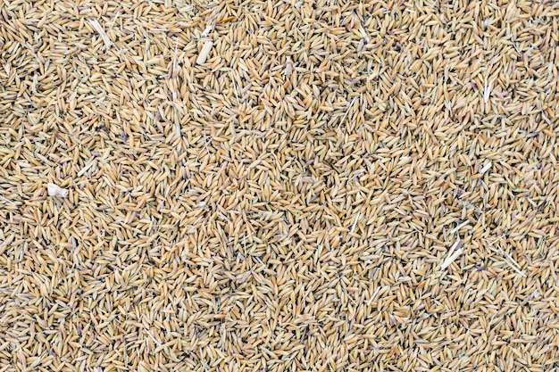 Ryż niełuskany na tle