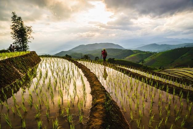 Ryż polowy