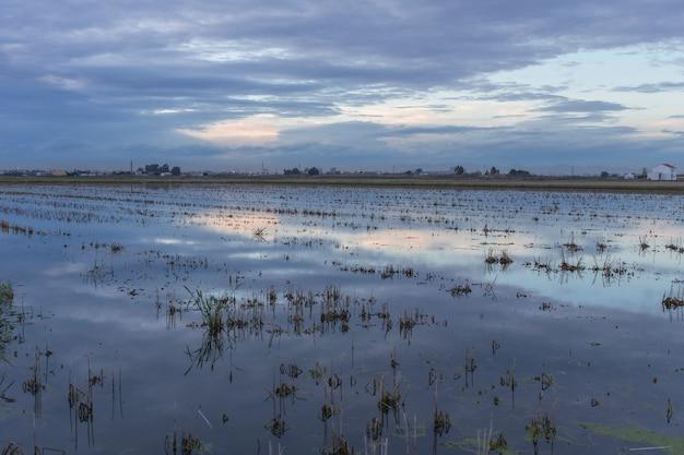 Ryżowe pole w albufera walencji o zachodzie słońca.