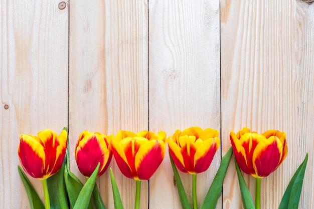 Rząd czerwonych i żółtych tulipanów na jasnym drewnianym tle wzdłuż ogrodzenia. świeże delikatne kwiaty. skopiuj miejsce