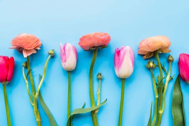 Rząd delikatnych świeżych kwiatów na łodygach