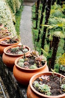 Rząd glinianych doniczek z sukulentami i kaktusami.