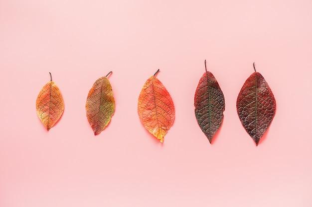 Rząd kolorowych liści jesienią. minimalistyczny styl. widok z góry, leżał płasko. koncepcja jesień