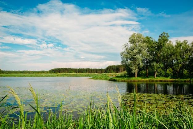 Rzeczny lato krajobraz z drzewami i płochami