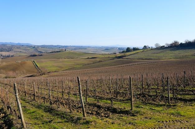 Rzędy winnic ze wzgórz toskanii. włoskie rolnictwo.