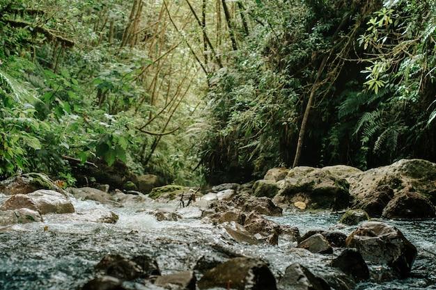 Rzeka, dziki las w alajuela, kostaryka.