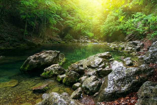 Rzeka głęboko w górskim lesie