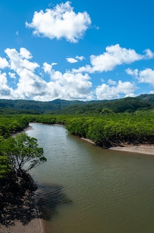 Rzeka goyoshi przepływająca między bujnym lasem namorzynowym