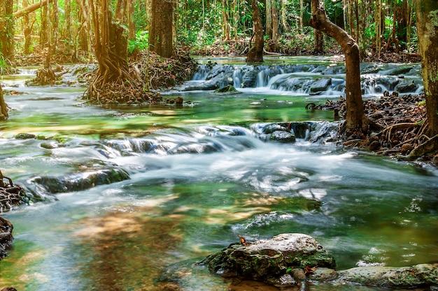 Rzeka kamień i drzewo kolorowi, widoku wodny rzeczny drzewo w lesie