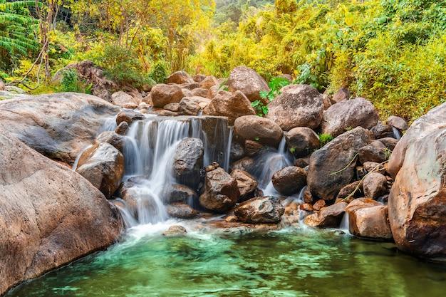 Rzeka kamień i siklawa z drzewny kolorowym, widoku wodny rzeczny drzewo w lesie
