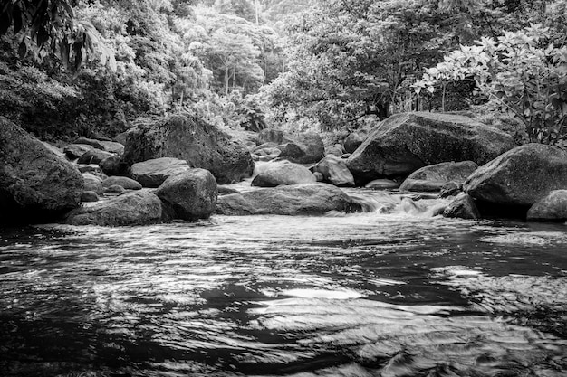 Rzeka kamień i zielone drzewo, kamień rzeka zielony liść drzewa w lesie, czarno-biały i monochromatyczny styl