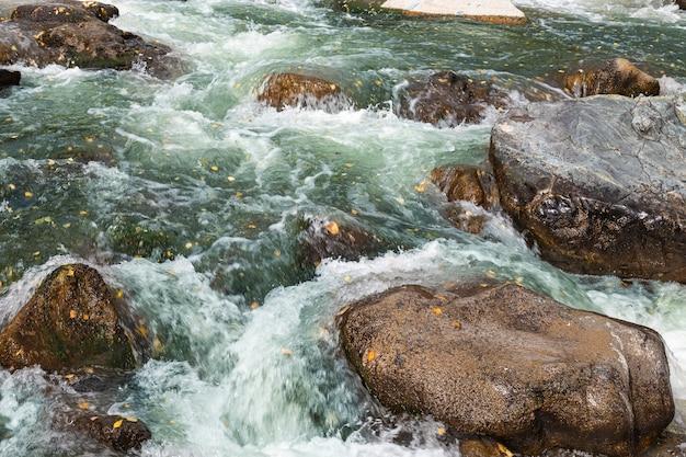 Rzeka katun z turkusową wodą z żółtymi jesiennymi liśćmi i dużym kamieniem