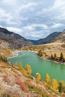Rzeka katun z turkusową wodą żółte jesienne drzewa w górach ałtaj syberia rosja