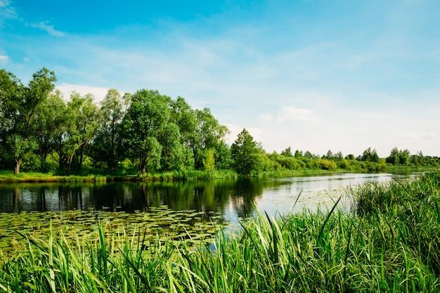 Rzeka krajobraz z drzewami i trzcinami