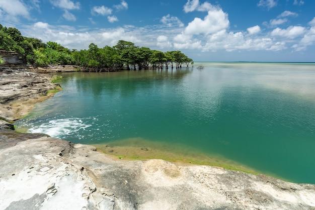 Rzeka omijya płynąca do imponującego szmaragdowo-zielonego morza, drzewa namorzynowe w tle. wyspa iriomote.