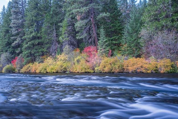 Rzeka otoczona kwiatami jesienią w ciągu dnia