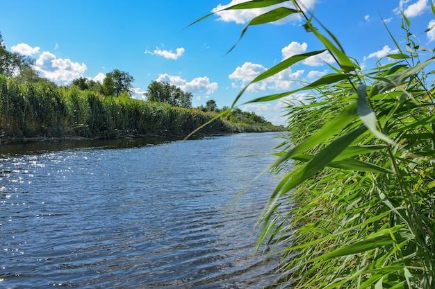 Rzeka płynąca między ożypałką na zachmurzonym niebie