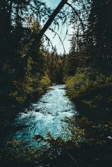 Rzeka pomiędzy lasem