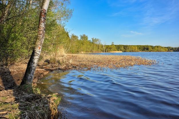 Rzeka porośnięta jest trawą. las w tle (2)