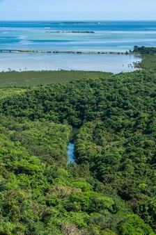 Rzeka przepływająca przez bujny las namorzynowy