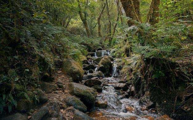Rzeka przepływająca przez las między skałami i opadłymi liśćmi. las galicja latem. droga santiago