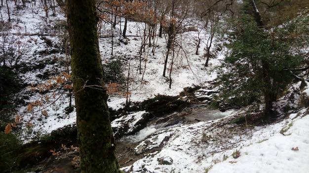 Rzeka przepływająca przez las pokryty śniegiem