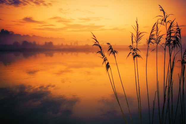 Rzeka reeds zachód słońca sceneria