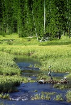 Rzeka snake yellowstone