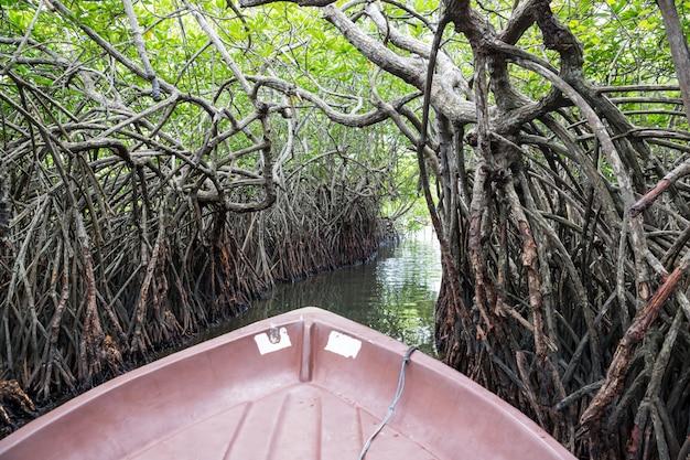 Rzeka, tropikalne namorzyny cejlon, widok z łodzi