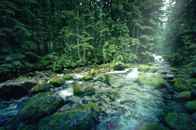 Rzeka w ciemnym lesie.