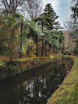 Rzeka w dżungli z palmami