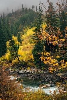 Rzeka w lesie jesienią