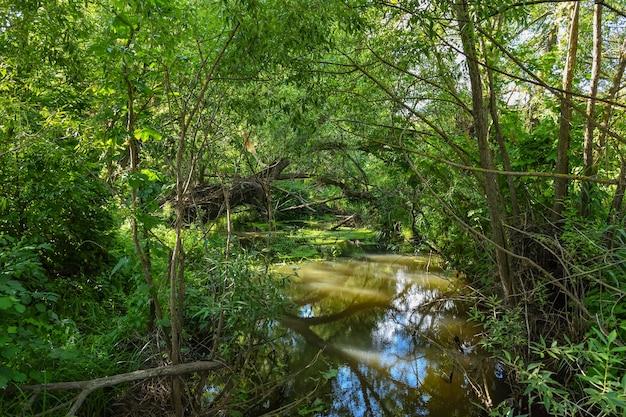 Rzeka w lesie, płynąca między drzewami