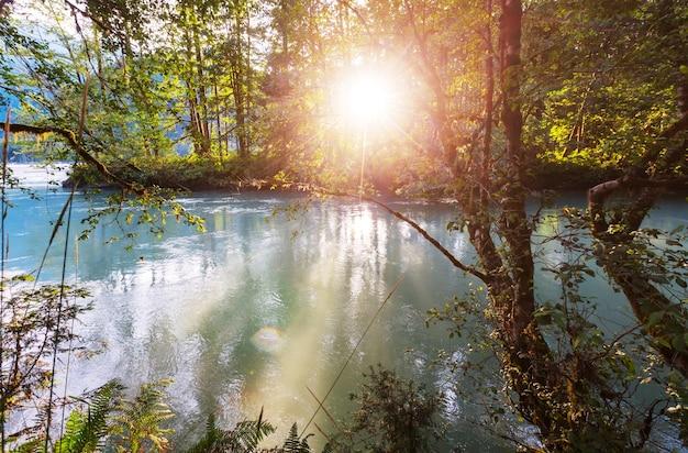 Rzeka w lesie