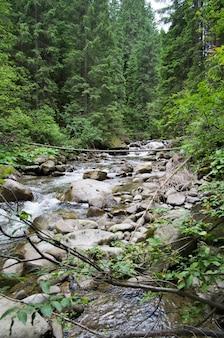 Rzeka w naturalnym lesie