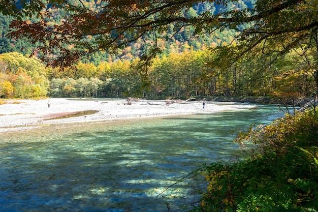 Rzeka w sosnowym lasowym drzewie, wycieczkuje w kamikochi, japonia