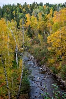 Rzeka w środku lasu w minnesocie