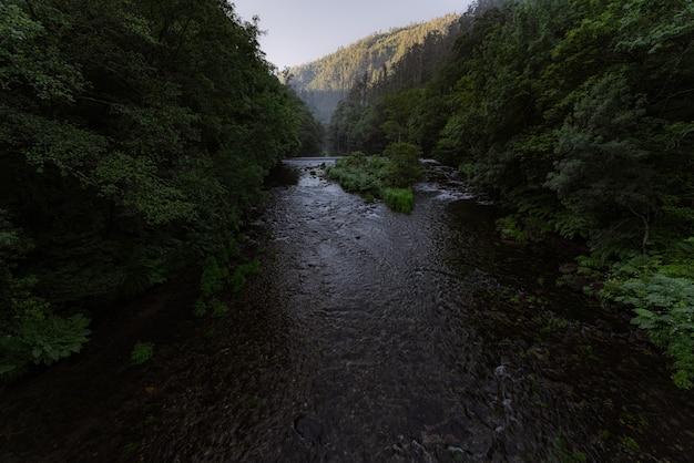 Rzeka w zielonym bujnym lesie deszczowym w dolinie eume river fragas do eume park przyrodniczy ciemny nastrój