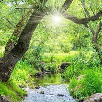 Rzeka w zielonym lesie. krajobraz środowiska z promieniami słońca