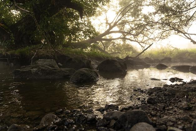 Rzeka z bystrzami we mgle w lesie rano o świcie.