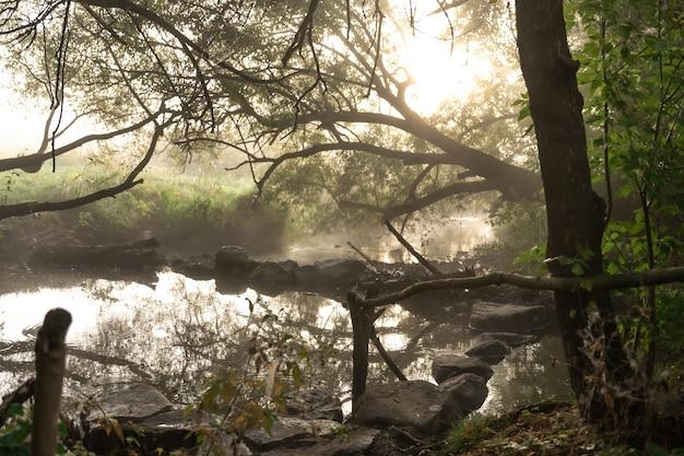 Rzeka z bystrzami we mgle w lesie wczesnym jesiennym rankiem